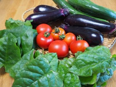 N_studiomimosa夏野菜2