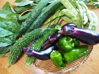 N_studiomimosa夏野菜2016