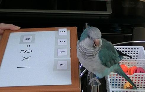数式の掛け算1_11