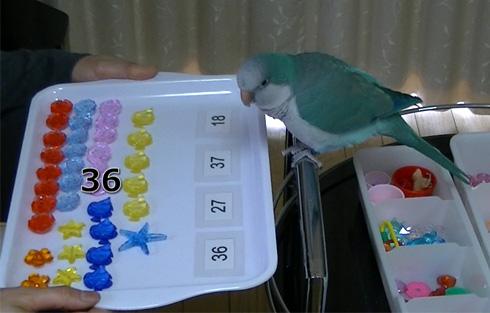 数字おもちゃ1_10