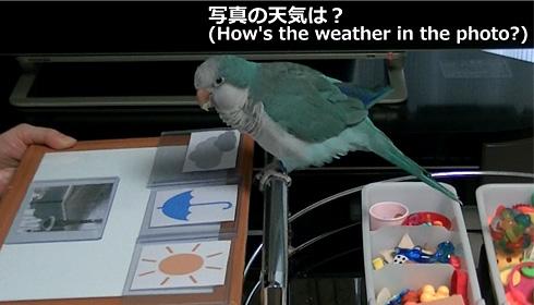天気1_4