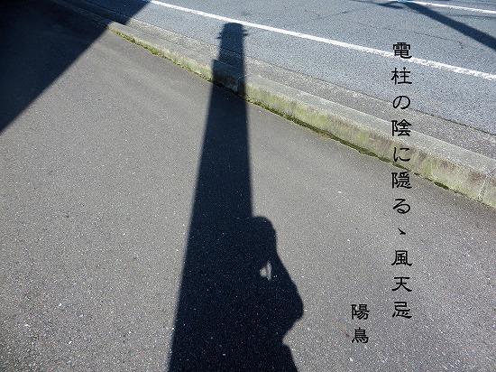 ku2710.jpg