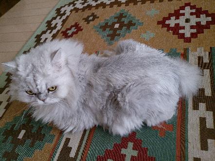 猫1606200002