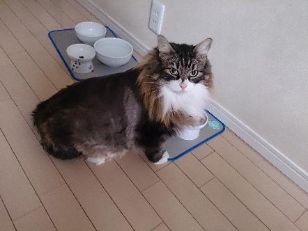 猫1606200004