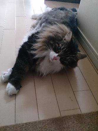 猫1608010013(1)