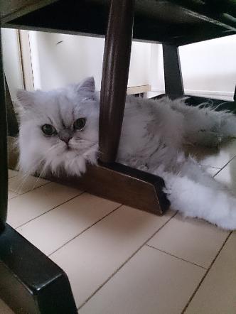 猫1608010014(1)