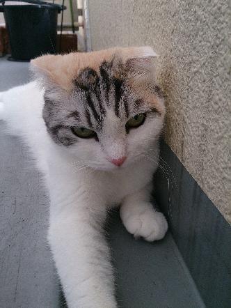 猫1608010015(1)