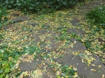 黄色くなった葉
