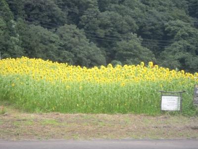 おやじの花畑160807