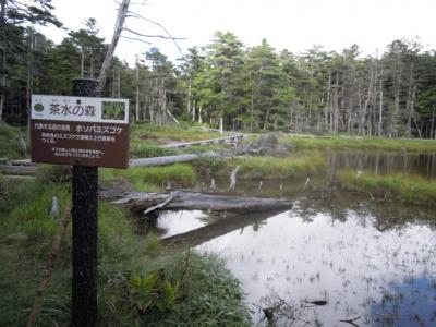 茶水の森160825
