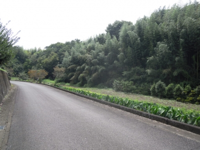 渋沢に行く道と並山百合ラインに出た
