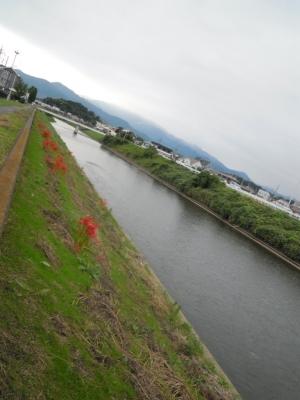 鈴川土手の彼岸花160921