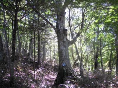 緩やかな登りの林160927