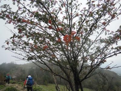 白い花が咲き赤い実を付けて160927