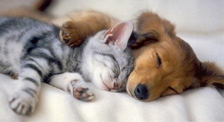 犬猫の昼寝