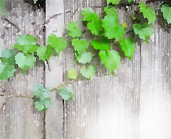 leaf0001