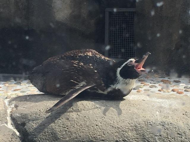 仙台うみの杜水族館 ペンギン1