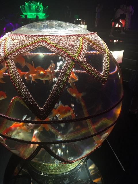 アートアクアリウム 2016 ~江戸・金魚の涼~ ナイトアクアリウム5