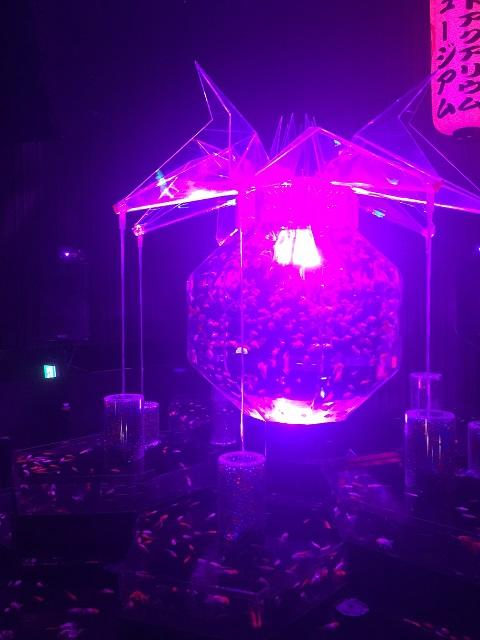 アートアクアリウム 2016 ~江戸・金魚の涼~ ナイトアクアリウム6
