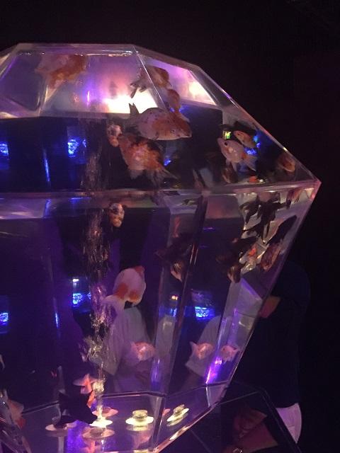 アートアクアリウム 2016 ~江戸・金魚の涼~ ナイトアクアリウム9