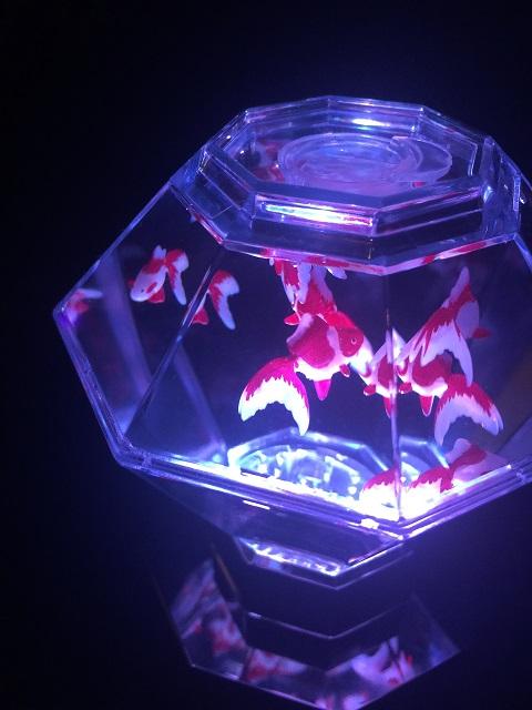 アートアクアリウム 2016 ~江戸・金魚の涼~ ナイトアクアリウム12