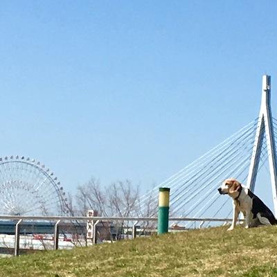 八幡屋公園3犬