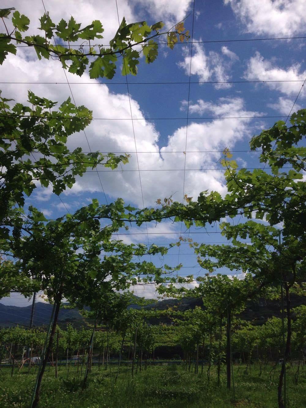 2016 07 09 Wa Yawata カベルネ