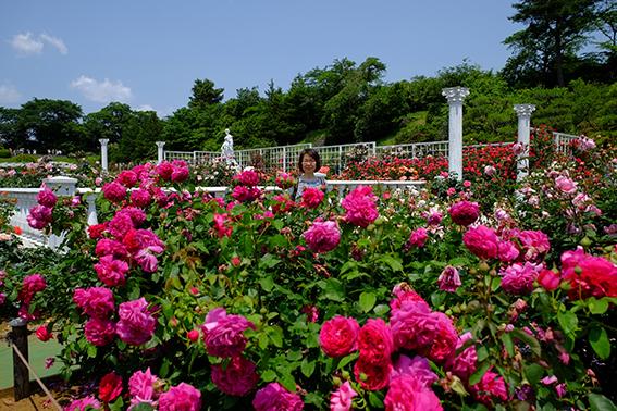 生田緑地バラ苑06