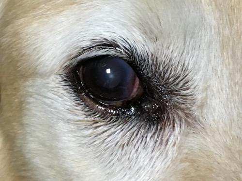 角膜に白濁し始め