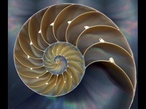 fibonati20161009.jpg