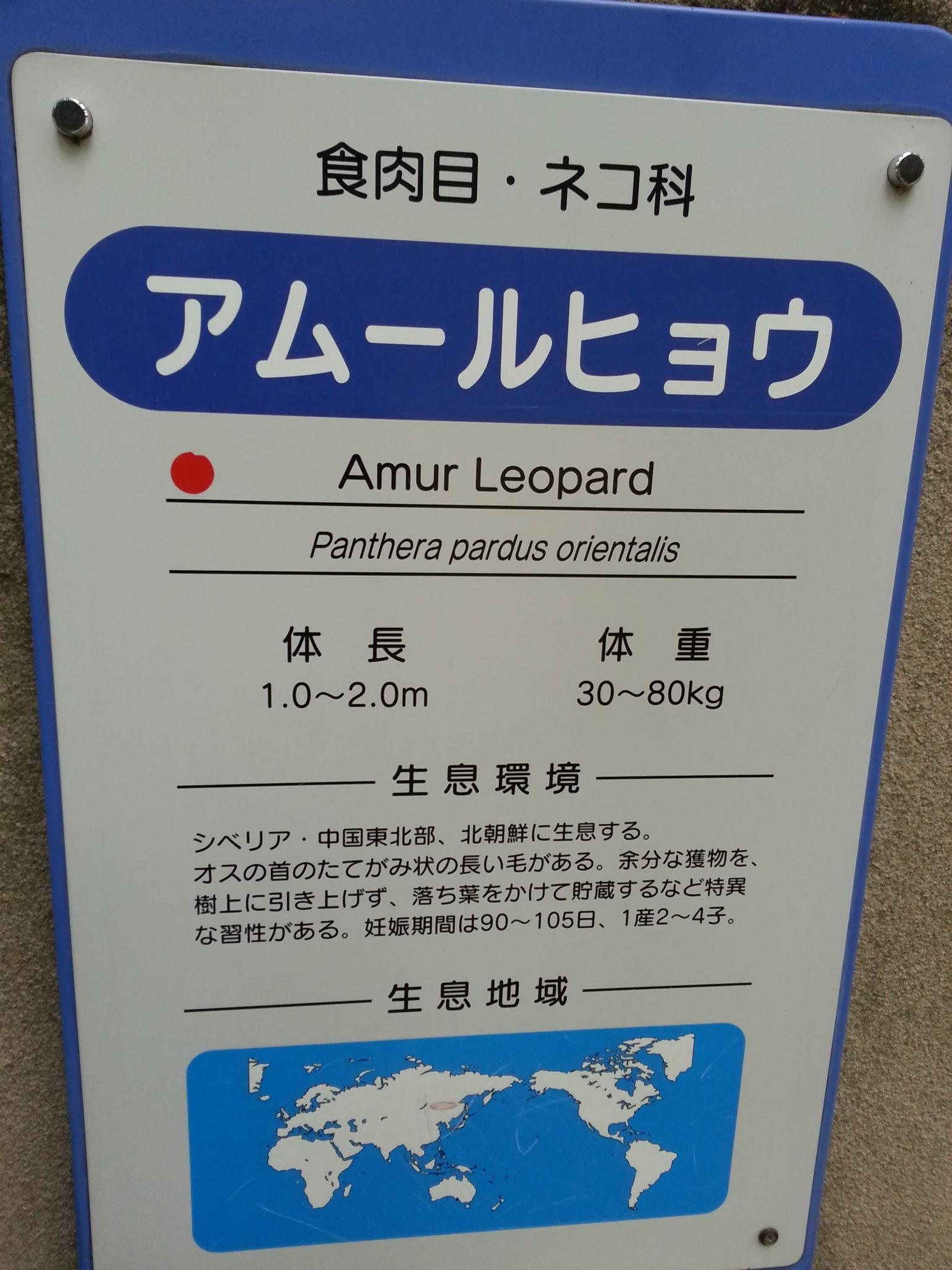 20160501_王子動物園ヒョウ