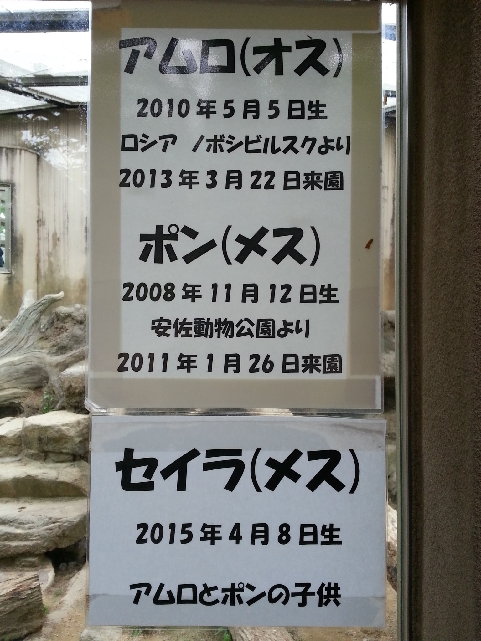20160501_王子動物園ヒョウの名前(アムロ・セイラ)