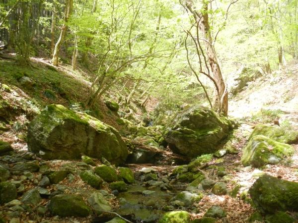 大岳山 056