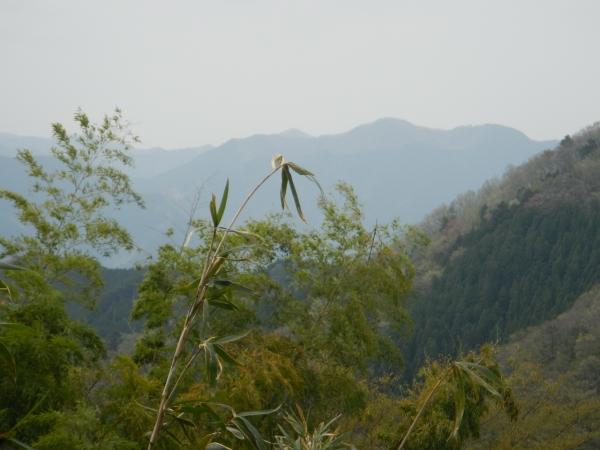 大岳山 099