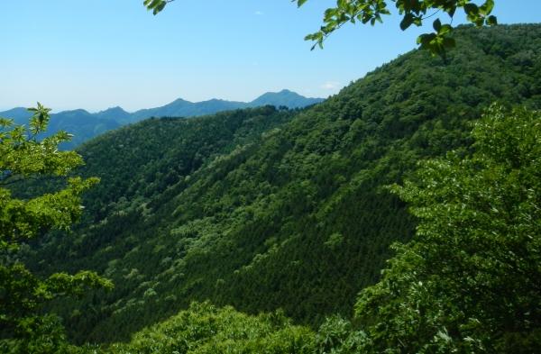 川苔山 028