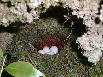 鳥の巣 6月3日