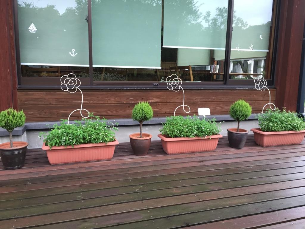 9月の植物04