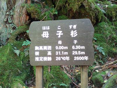 1605 屋久島 12