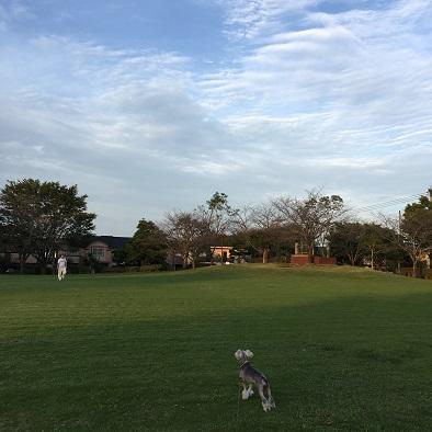 鷹の台公園 秋