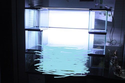 ADA世界水草レイアウトコンテスト