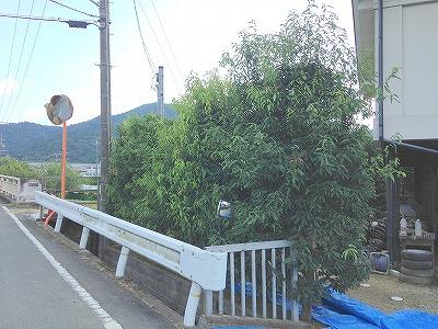 町道樫2 2016 (1)