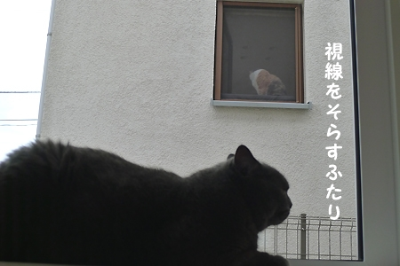 P1080983.jpg