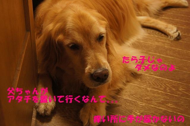 DSC07058.jpg