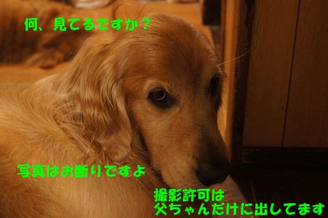 DSC07062.jpg