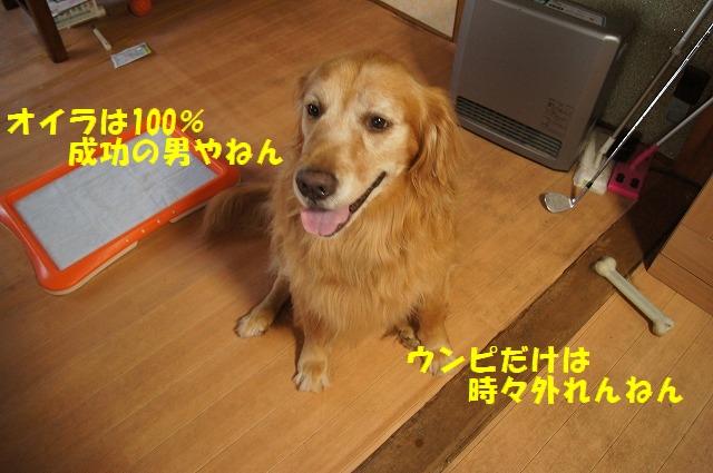 DSC07124_2016092619471832a.jpg
