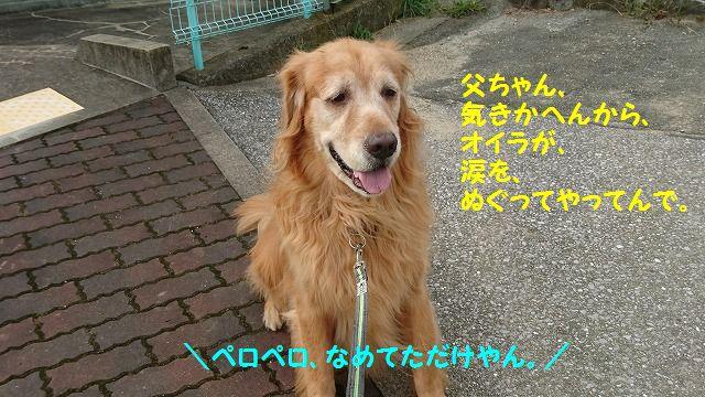 DSC_0184.jpg