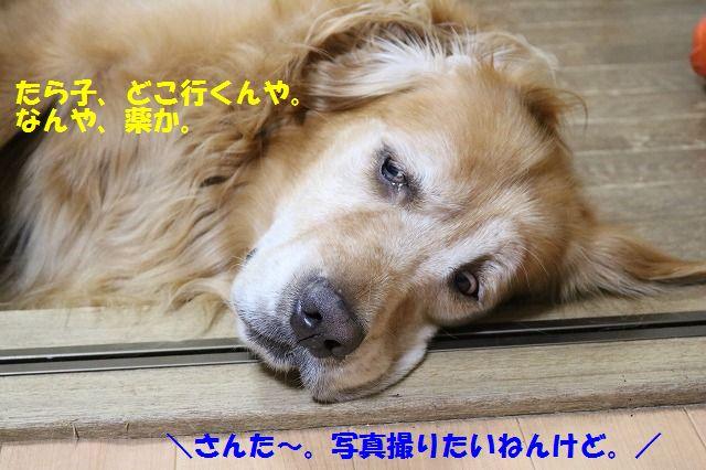 IMG_0291_2016080522504073e.jpg
