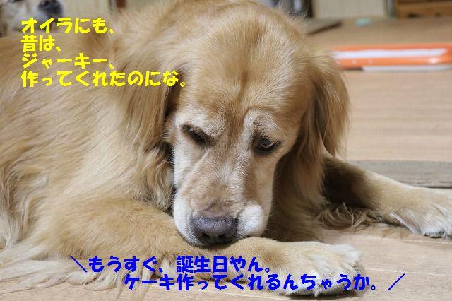 IMG_0831_20160812235531287.jpg