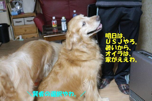 IMG_0952_201608140108258eb.jpg
