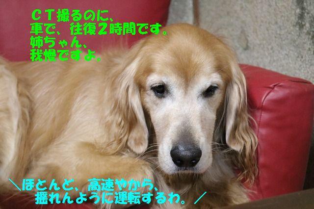 IMG_1113_20160818235223eca.jpg